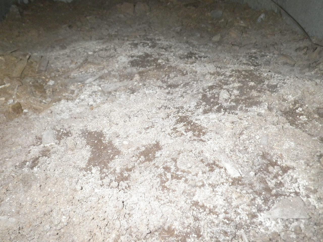 土壌のカビ2