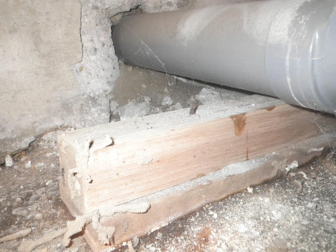 排水管の台座の木材にも蟻道