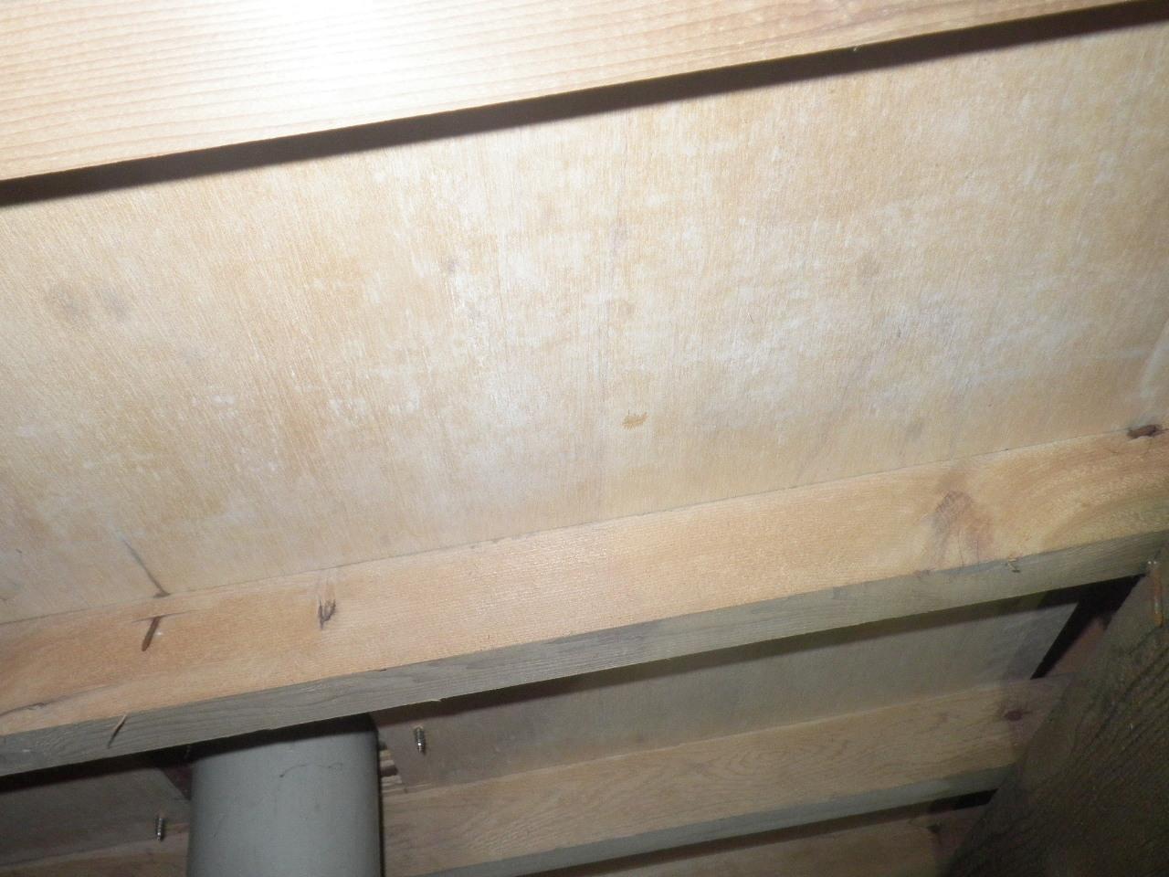 床板裏のカビ